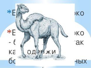 Верблюжье молоко Верблюжье молоко - более солёное, так как содержит больше ми