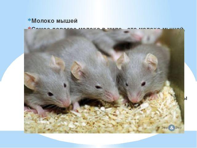 Молоко мышей Самое дорогое молоко в мире - это молоко мышей. Оказывается, са...