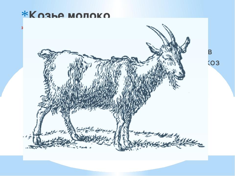 Козье молоко Козье молоко широко представлено в питании жителей многих стран...
