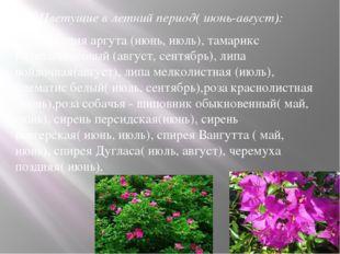 2.Цветущие в летний период( июнь-август): актинидия аргута (июнь, июль), там