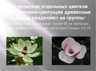 По величине отдельных цветков декоративно-цветущие древесные породы разделяют
