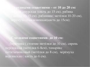 С крупными соцветиями – от 10 до 20 см: маакия амурская (кисть до 15 см), ряб