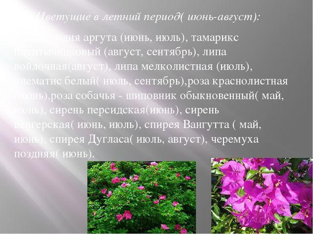 2.Цветущие в летний период( июнь-август): актинидия аргута (июнь, июль), там...