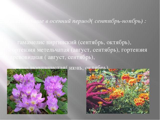 3. Цветущие в осенний период( сентябрь-ноябрь) : гамамелис виргинский (сентяб...
