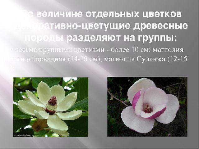 По величине отдельных цветков декоративно-цветущие древесные породы разделяют...