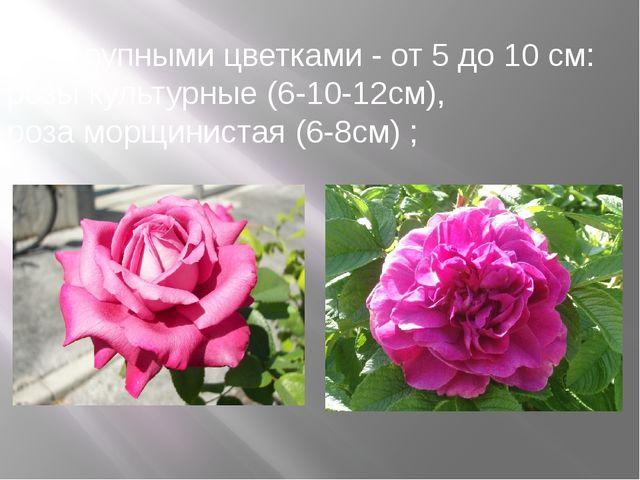 б) с крупными цветками - от 5 до 10 см: розы культурные (6-10-12см), роза мор...