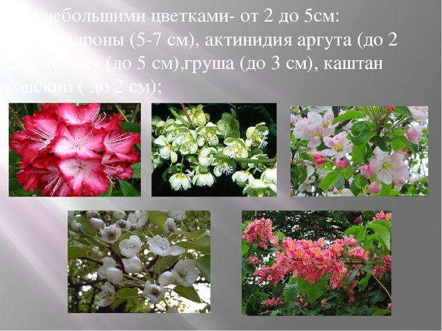 в) с небольшими цветками- от 2 до 5см: рододендроны (5-7 см), актинидия аргут...