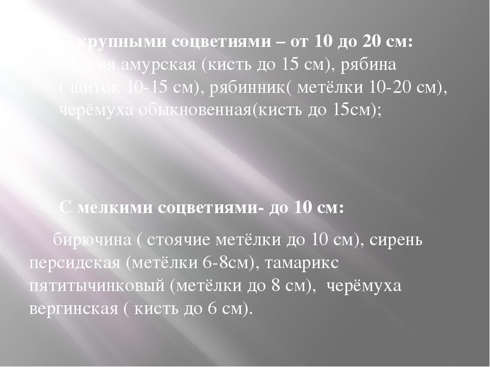 С крупными соцветиями – от 10 до 20 см: маакия амурская (кисть до 15 см), ряб...