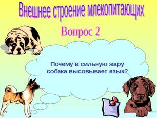Почему в сильную жару собака высовывает язык?