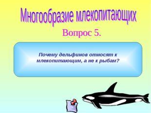 Почему дельфинов относят к млекопитающим, а не к рыбам?