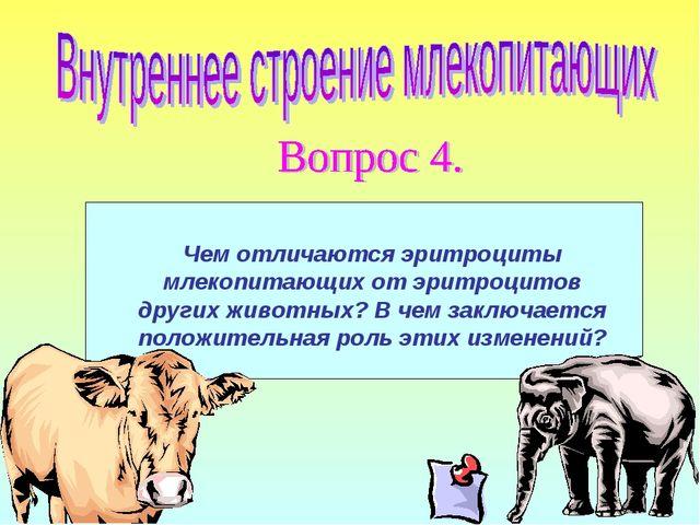 Чем отличаются эритроциты млекопитающих от эритроцитов других животных? В чем...