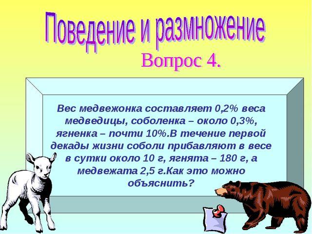 Вес медвежонка составляет 0,2% веса медведицы, соболенка – около 0,3%, ягненк...