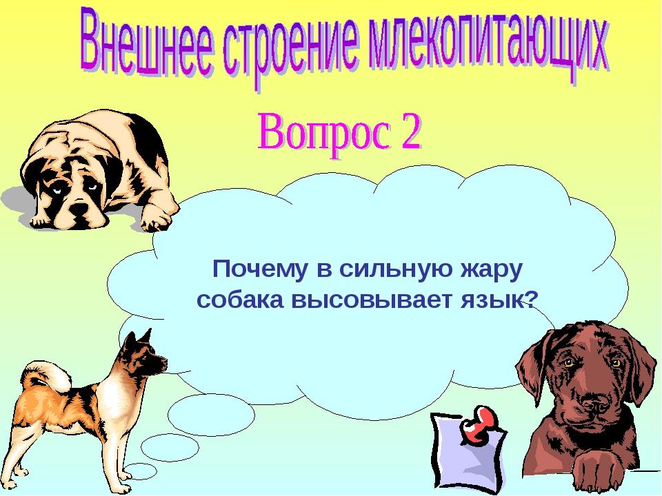 Почему собаки высовывают язык в жаркую погоду как проверить эту гипотезу