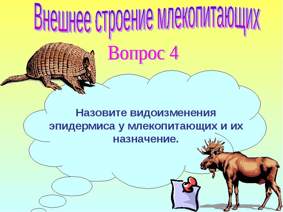 Назовите видоизменения эпидермиса у млекопитающих и их назначение.