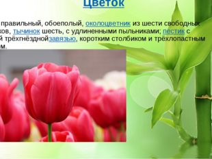 Цветок Цветок правильный, обоеполый,околоцветникиз шести свободных листочк