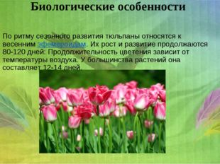 Биологическиеособенности По ритму сезонного развития тюльпаны относятся к ве