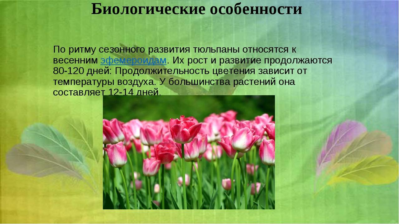 Биологическиеособенности По ритму сезонного развития тюльпаны относятся к ве...
