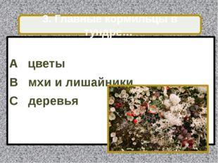 A цветы B мхи и лишайники C деревья 3. Главные кормильцы в тундре…