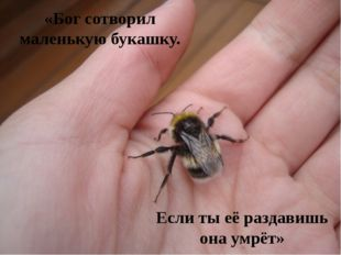«Бог сотворил маленькую букашку. Если ты её раздавишь она умрёт»