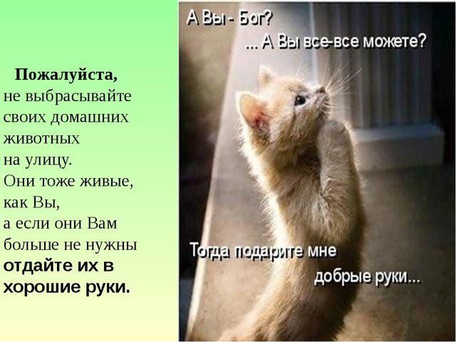 Пожалуйста, не выбрасывайте своих домашних животных на улицу. Они тоже живые...