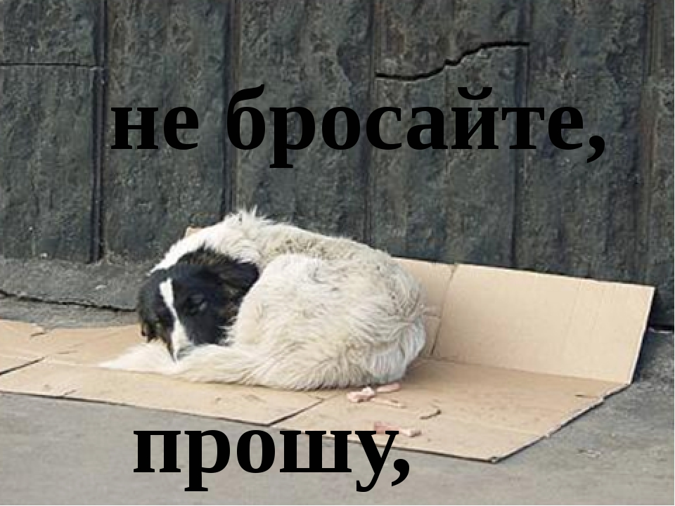 не бросайте, прошу, собак!!!