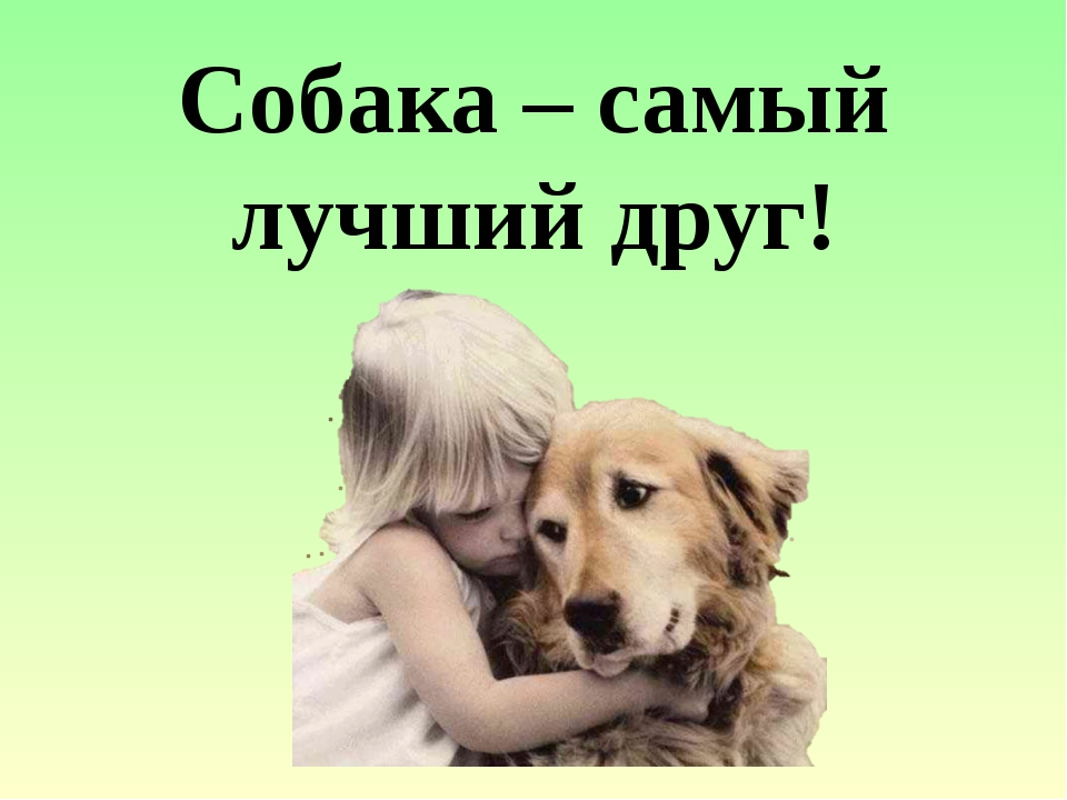 Собака – самый лучший друг!
