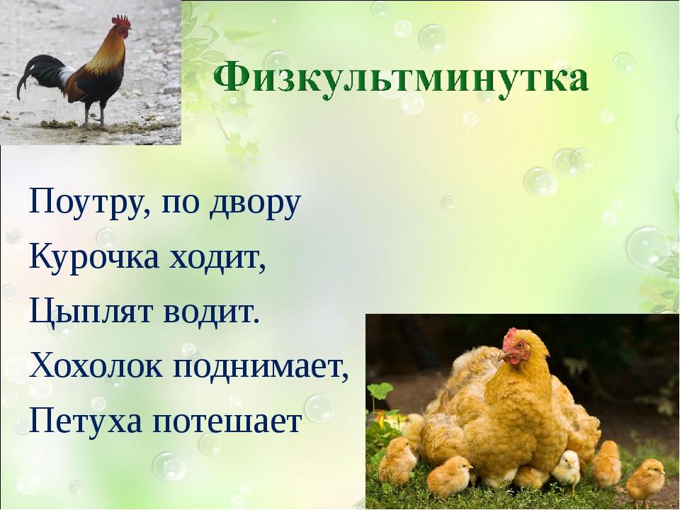 Поутру, по двору Курочка ходит, Цыплят водит. Хохолок поднимает, Петуха поте...