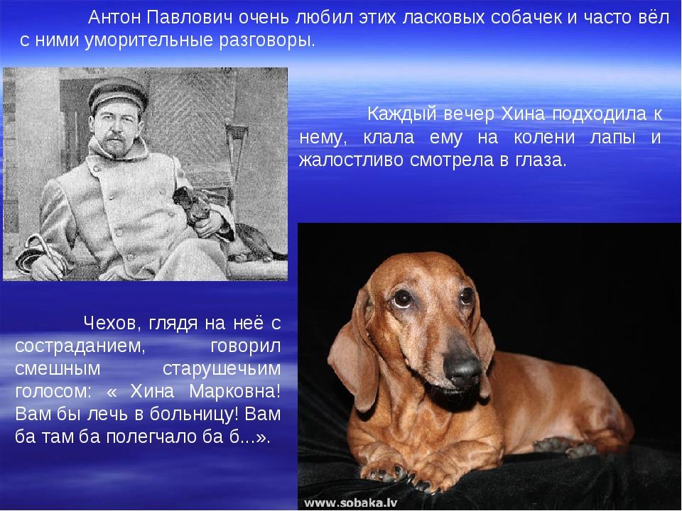 Антон Павлович очень любил этих ласковых собачек и часто вёл с ними уморител...