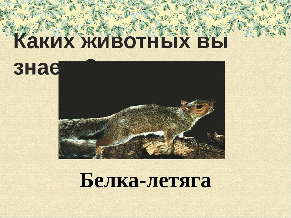 Каких животных вы знаете?