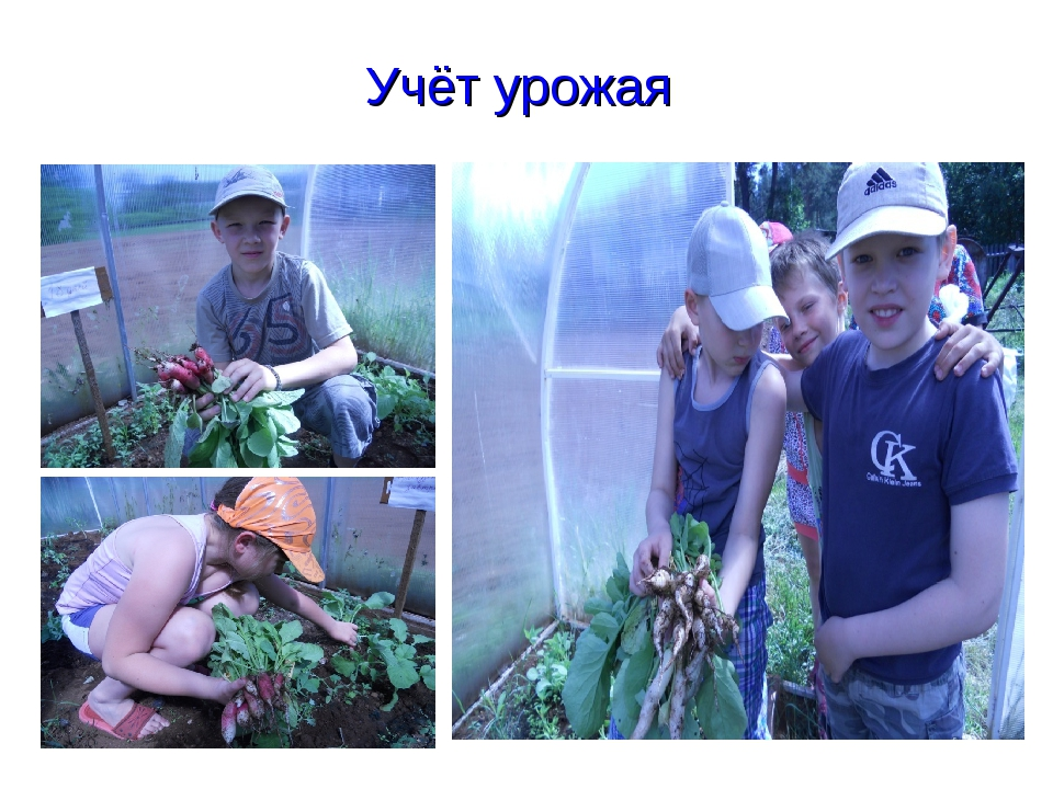 Учёт урожая