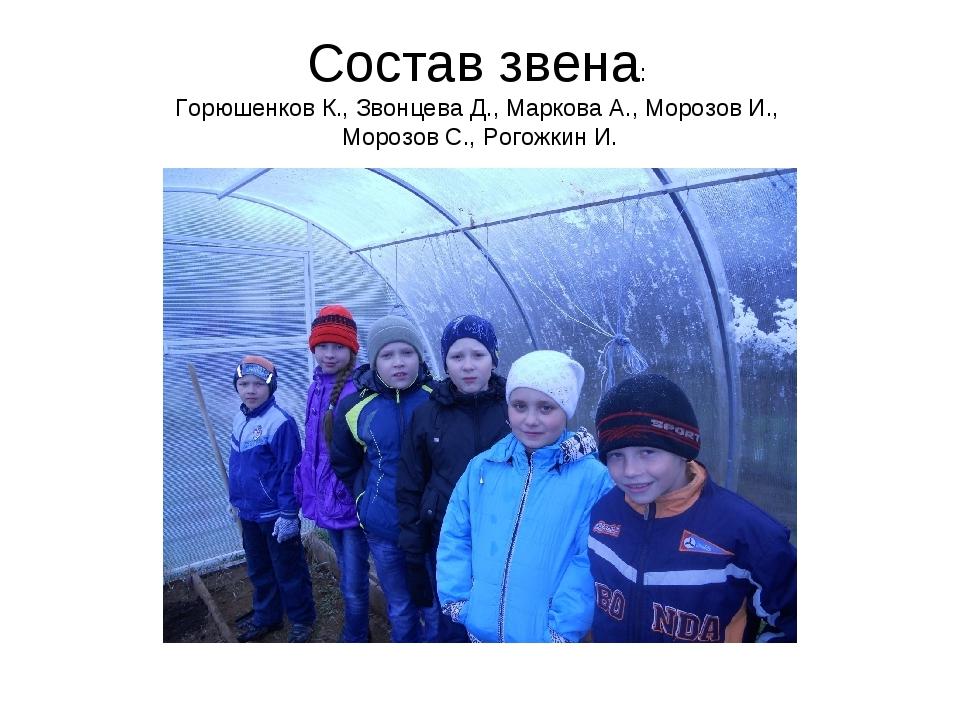 Состав звена: Горюшенков К., Звонцева Д., Маркова А., Морозов И., Морозов С.,...