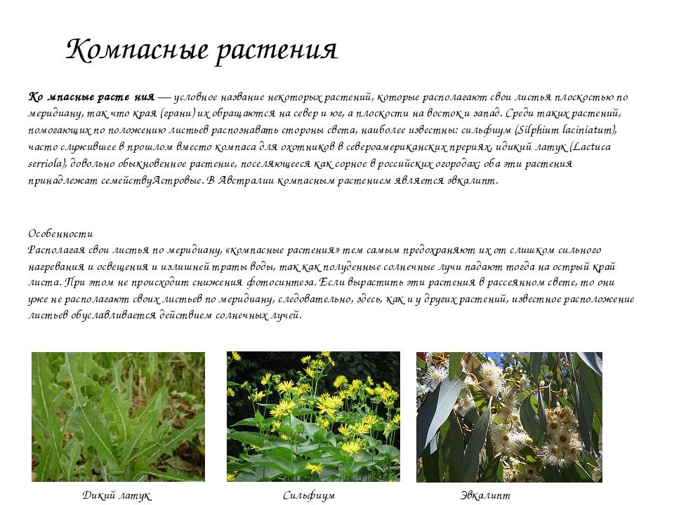 Компасные растения Ко́мпасные расте́ния— условное название некоторых растени...