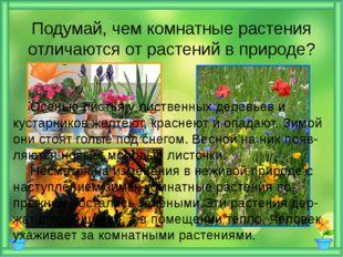 Подумай, чем комнатные растения отличаются от растений в природе? Осенью ли
