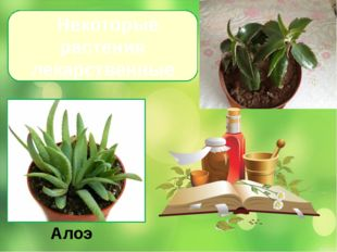 Некоторые растения лекарственные Алоэ