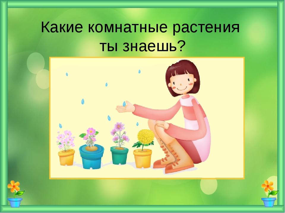 Какие комнатные растения ты знаешь?