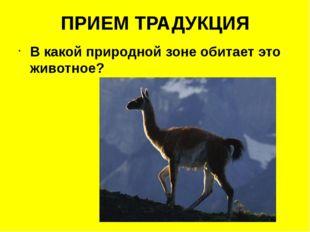 ПРИЕМ ТРАДУКЦИЯ В какой природной зоне обитает это животное?