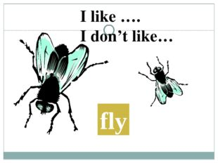 fly I like …. I don't like…