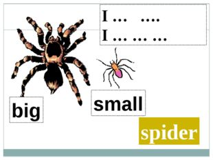 I … …. I … … … spider big small