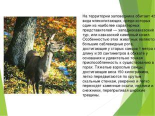 На территории заповедника обитает 43 вида млекопитающих, среди которых один