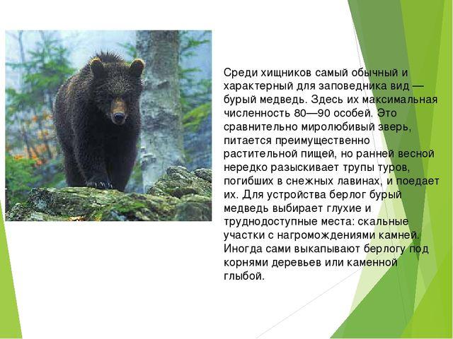 Среди хищников самый обычный и характерный для заповедника вид — бурый медве...