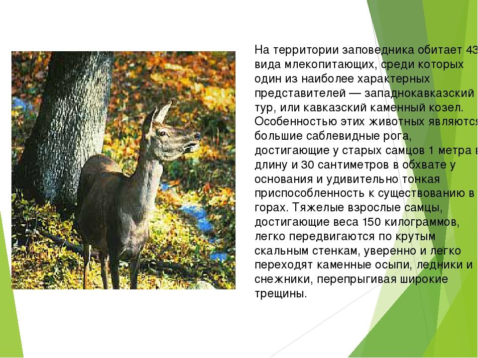 На территории заповедника обитает 43 вида млекопитающих, среди которых один...