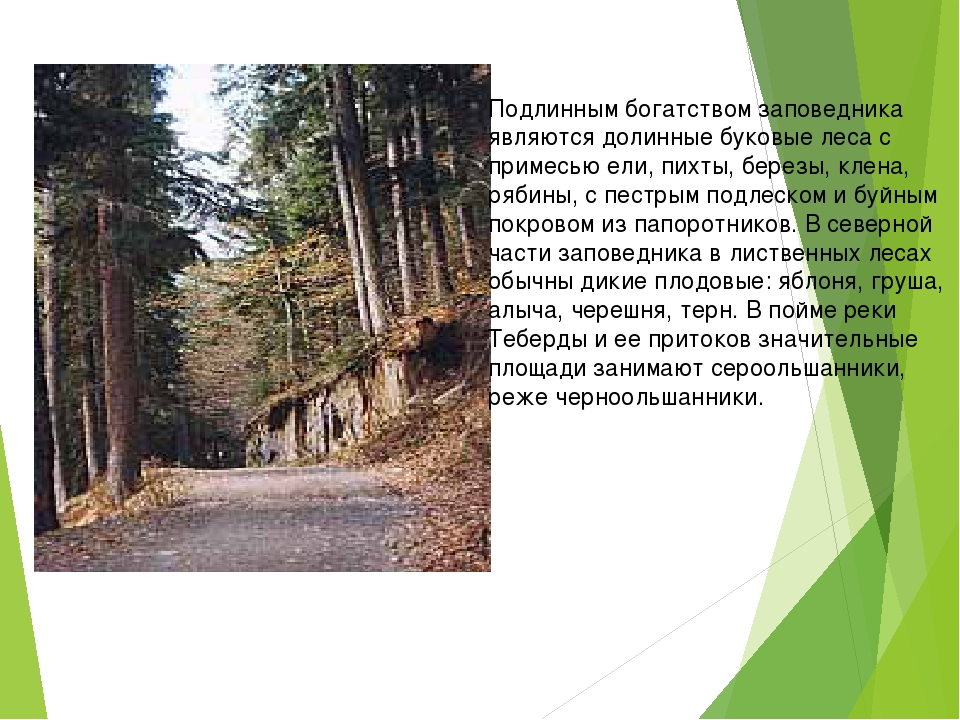 Подлинным богатством заповедника являются долинные буковые леса с примесью е...