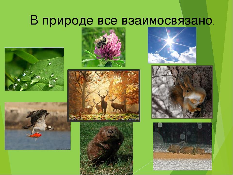 В природе все взаимосвязано.