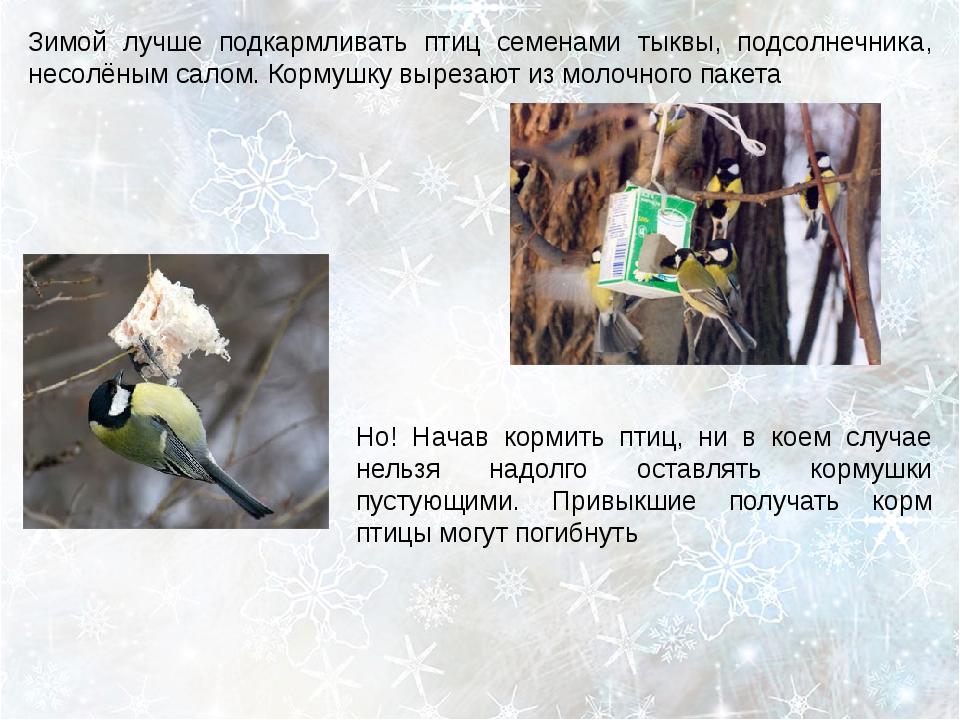 Зимой лучше подкармливать птиц семенами тыквы, подсолнечника, несолёным салом...