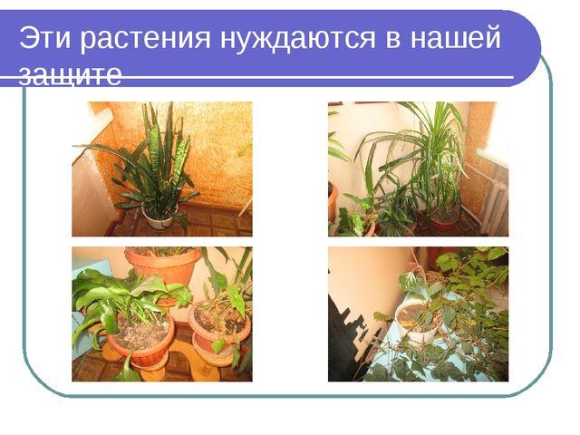 Эти растения нуждаются в нашей защите