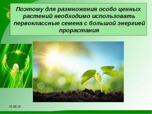 Поэтому для размножения особо ценных растений необходимо использовать первокл