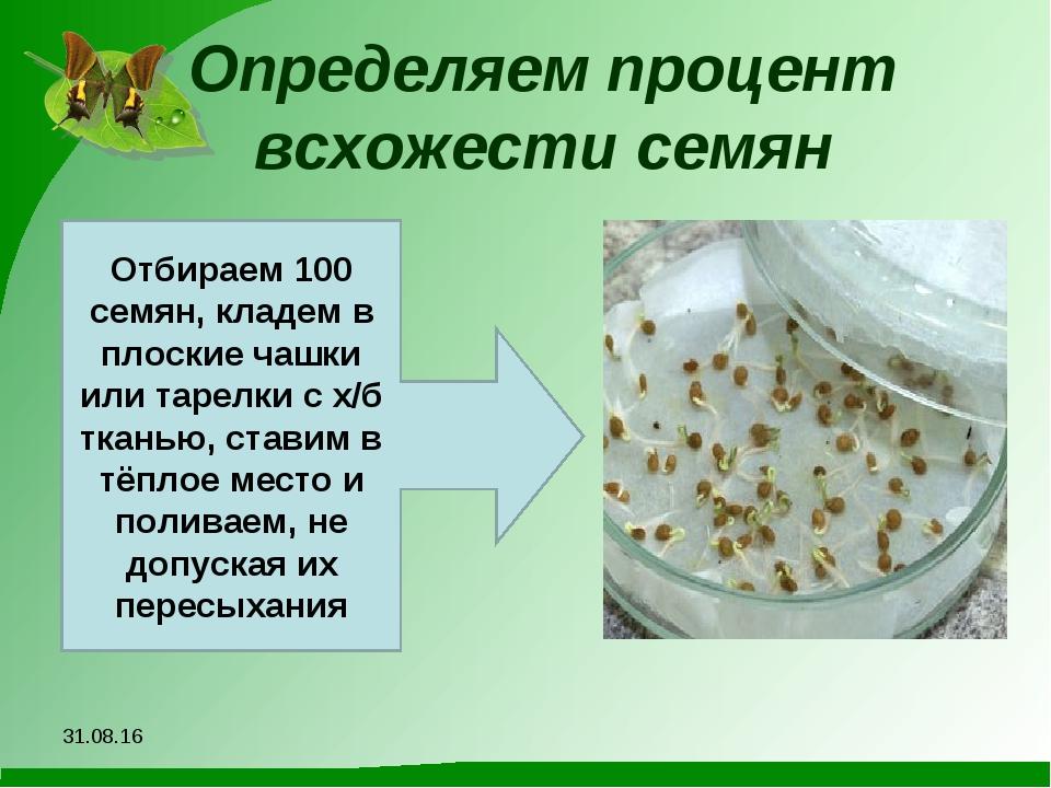 Определяем процент всхожести семян *