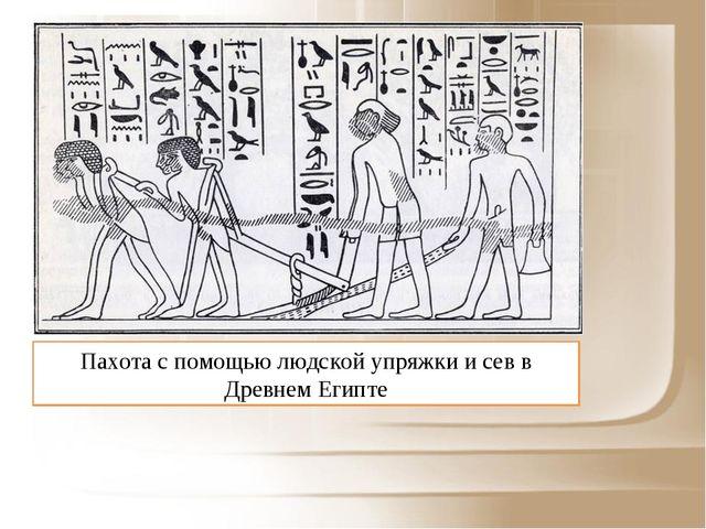 Пахота с помощью людской упряжки и сев в Древнем Египте