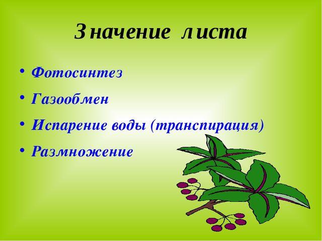 Значение листа Фотосинтез Газообмен Испарение воды (транспирация) Размножение