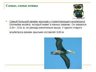 Самые, самые птицы Самый большой размах крыльев у странствующего альбатроса D